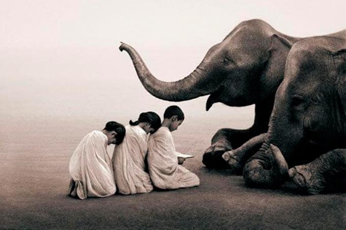 niños-ante-elefante—Confucio-y-Mencio