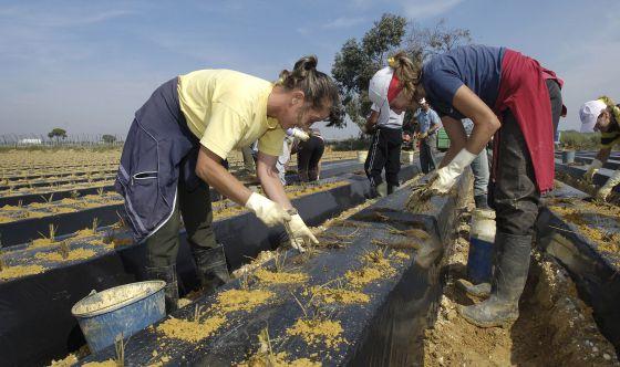 trabajadoras del campo